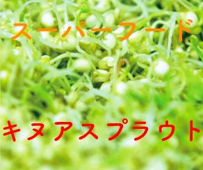 オーガニックレーベルの葉酸キヌアスプラウト.png